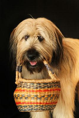"""""""Bilbo"""", so wünscht man sich Hunde, ein treuer Begleiter in allen Lebenslagen."""