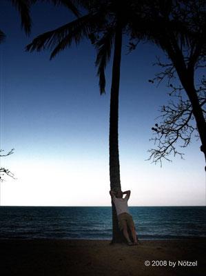 Palmenstrand an der Ostküste