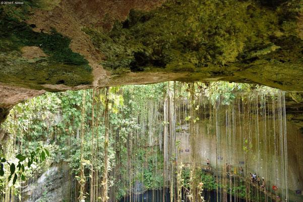 geheimisvolle Wasserlöcher der Azteken (so genannte Zenote)