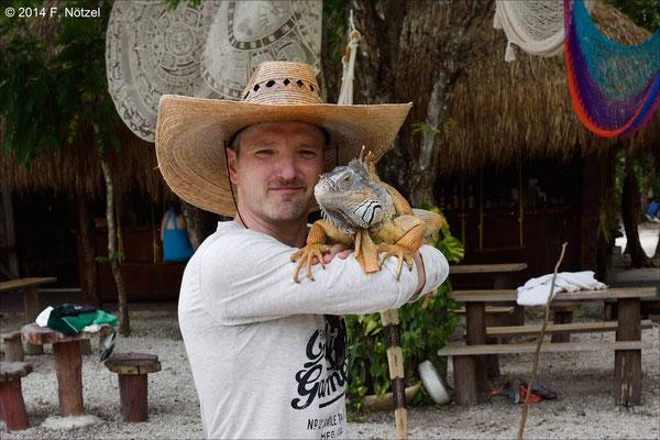 ein wunderschöner Leguan