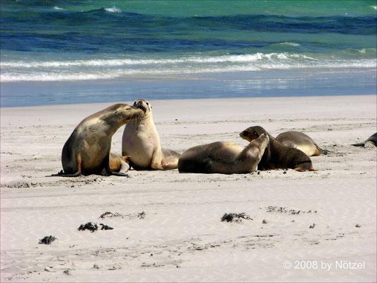 Seelöwenkolonie auf Kangaroo Island