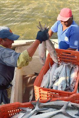 Fischer am Pazifik