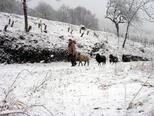 Umzug mit Schafen im Winter