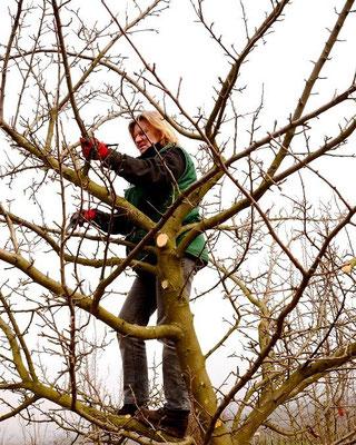 Baumpflegeaktion