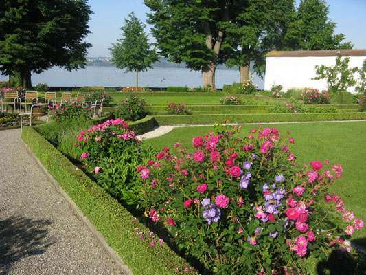 Rosenblüte im Barockgarten mit Buchseinfassungen