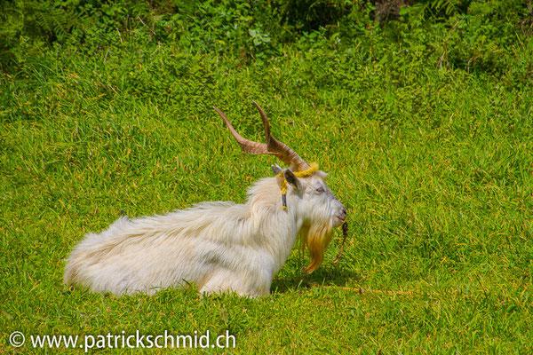 Wachhund 2