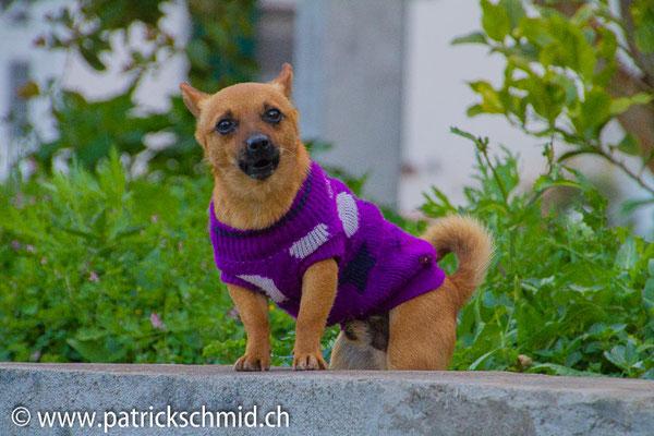 Wachhund 1