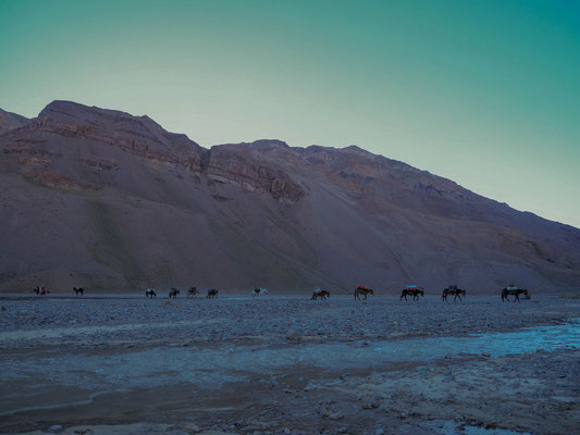 Mules cross the Vacas river