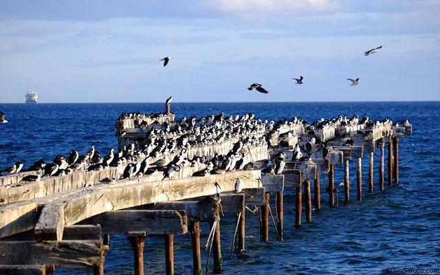 Punta Arenas Jetty