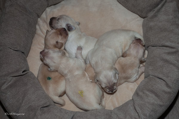 5 Jungs in einem Bett