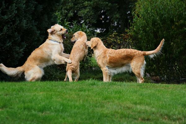 Maisie, Bella und Dina