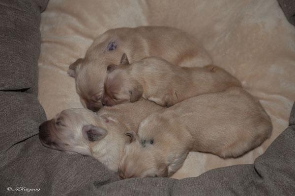 4 Mädels in einem Bett