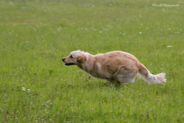 Fanni--Rennen was die Beine her geben