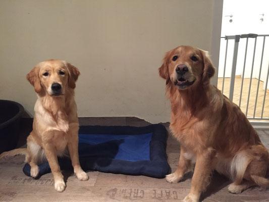 Bella und ihr großer Halbbruder Ares- der schwer verliebt war an diesem Nachmittag