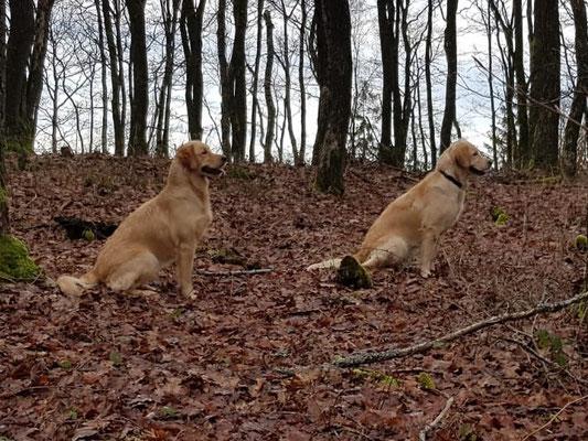 rechtss Mayla, links Bella- was es da wohl zu beobachten gab