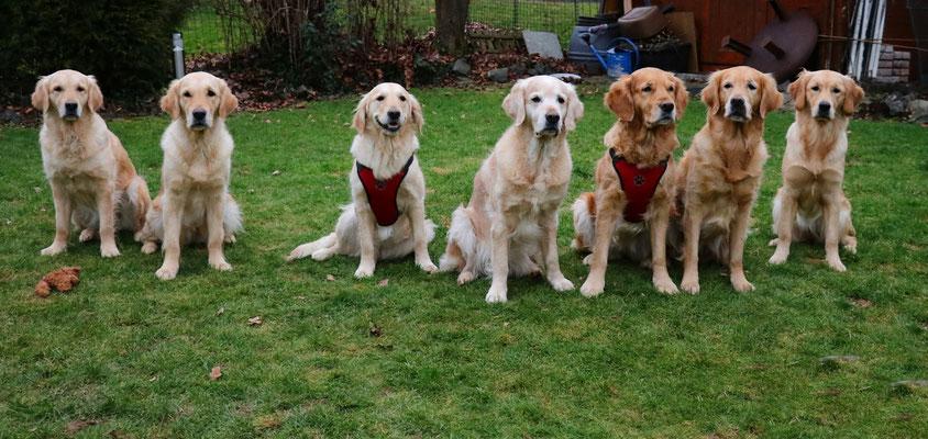 von links Fanni, Maisie, Fenja ( alle Schwestern) Blue, Laady Blue , Dina und Bella  ( Lady Blue und Dina auch Geschwister)