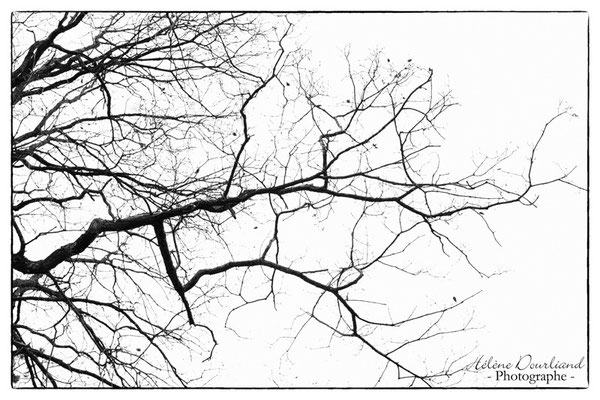 photo d'arbre en noir et blanc