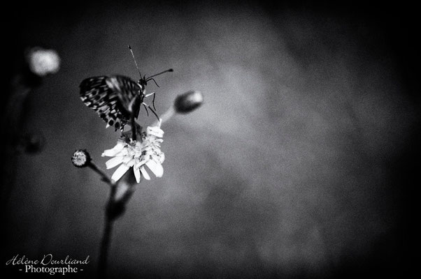 photo de papillon en noir et blanc