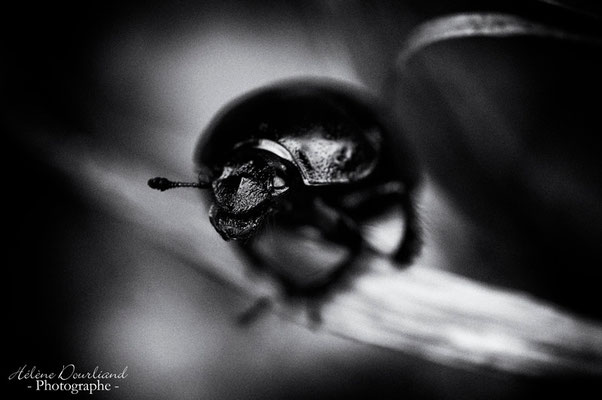 photo d'insecte en noir et blanc