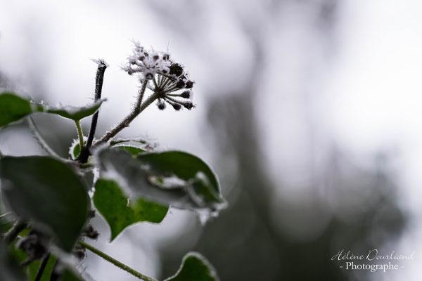 photo nature avec du givre en vallée de Chevreuse dans les Yvelines