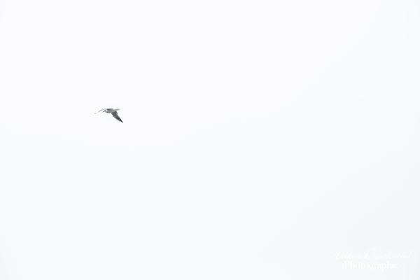 photo oiseau en vallée de Chevreuse dans les Yvelines