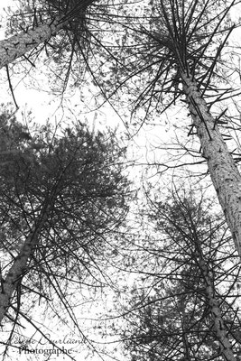 photo d'arbres en noir et blanc
