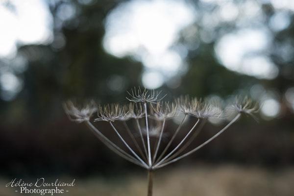 photographie de nature