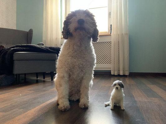 Lagotto Hund Filztier