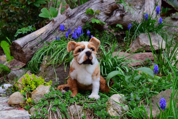 englische Bulldogge Hund