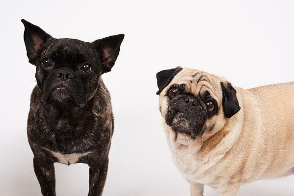 Elvis & Merlin Firmenhunde