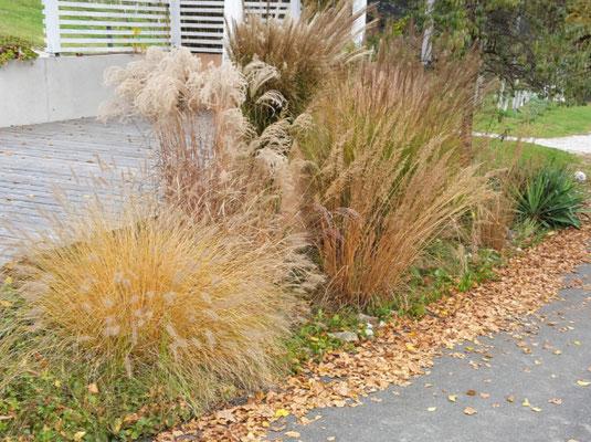 Gräserbeet im Herbstlook