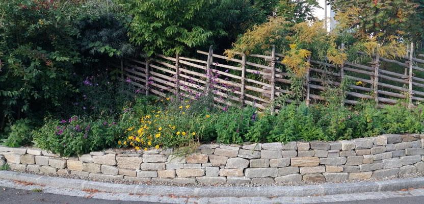 Natursteinmauer mit Wildstaudenbepflanzung im 1.Jahr