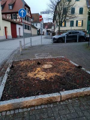 13.12.2019, Schwedische Mehlbeere gefällt, St.-Walbertus-Str.