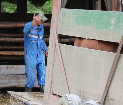 Hubert Hirschle holt die Kühe aus dem Stall