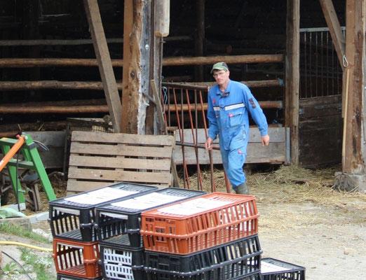 Die Kühe werden mit einem Tiertransport-Anhänger zur Weide gefahren