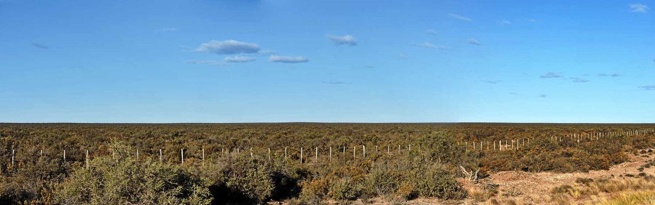Durch die gewohnt endlose Pampa geht es nach Punta Tombo, dem Pinguinort in Südamerika.