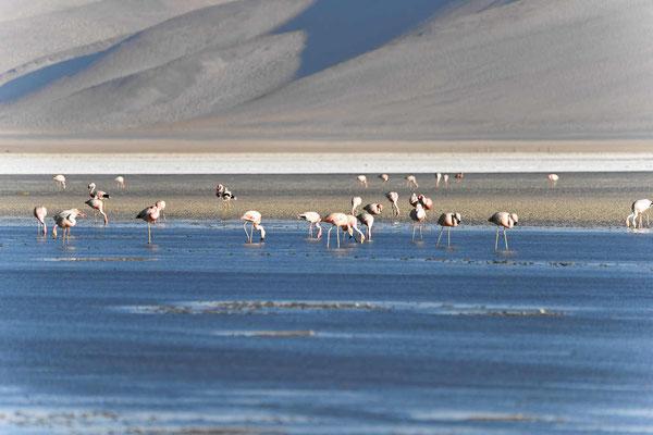Und nochmal Flamingos.