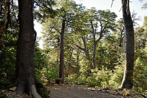 Urwald in der Reserva.