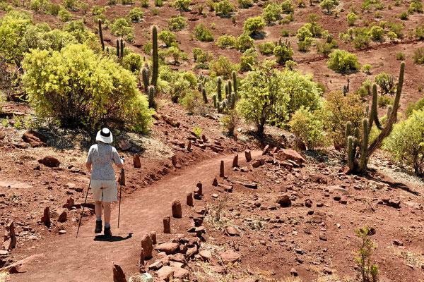 Marion auf einen Spaziergang durch die Kakteenwelt.