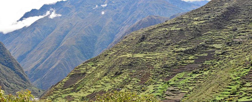 Wir denken, dass die Inkas die Terrassen gebaut haben.