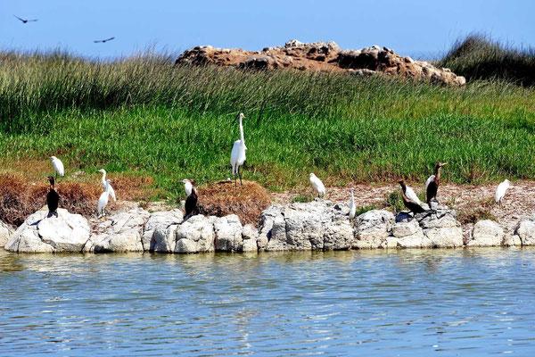Die Lagune ist ein wichtiger Stopp für Zugvögel. Im Moment sind aber nur Wasservögel dort zu finden.