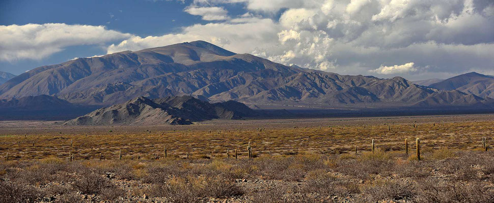 Der Nationalpark Los Cardones.