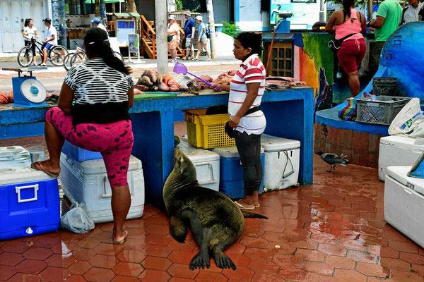 Zwischenstopp in Puerto Ayora - Fischstand mit weiteren Interessenten
