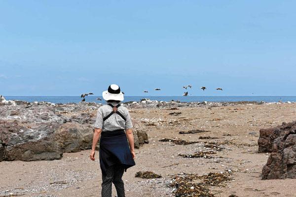 Wir haben viele Seevögel an der Küste erwartet und sind etwas enttäuscht, das wir z.B. Pelikane nur selten sehen.