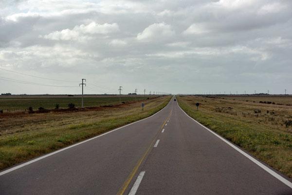 Wir fahren durch eine endlos weite Groß-Agrarlandschaft, alles platt und mit Reisenfeldern.