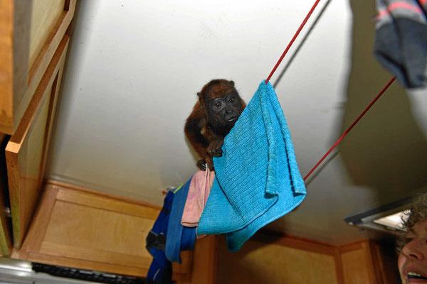 Der kleine Affe erkundet unser Womo.