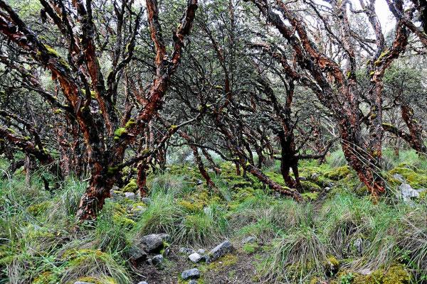 Eine Wanderung durch einen Märchenwald