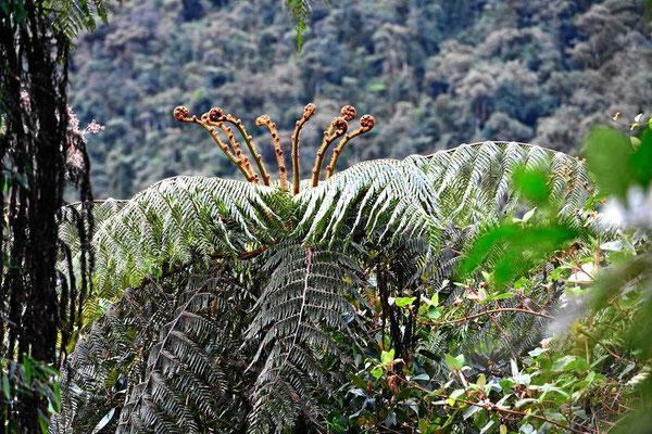 Pflanzenreichtum im Tapichala Schutzgebiet.