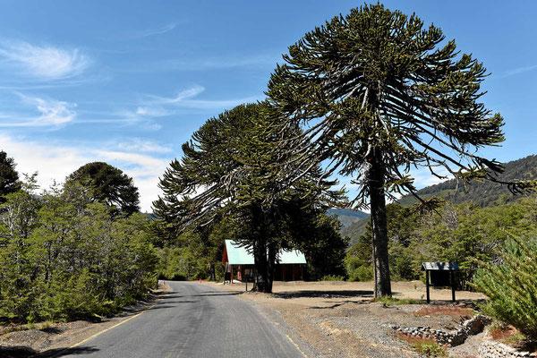 Der Eintritt zur Reserva Malalcahuello