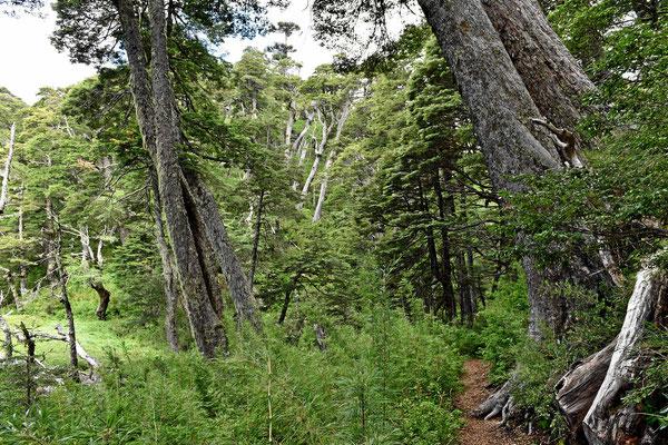 Wanderung durch den Märchenwald an der Laguna Captren.